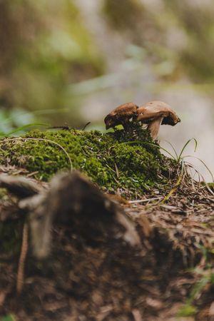 Kurse Pilze sammeln und verarbeiten