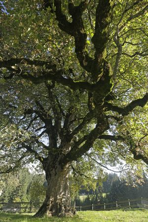 Extravagante Bäume