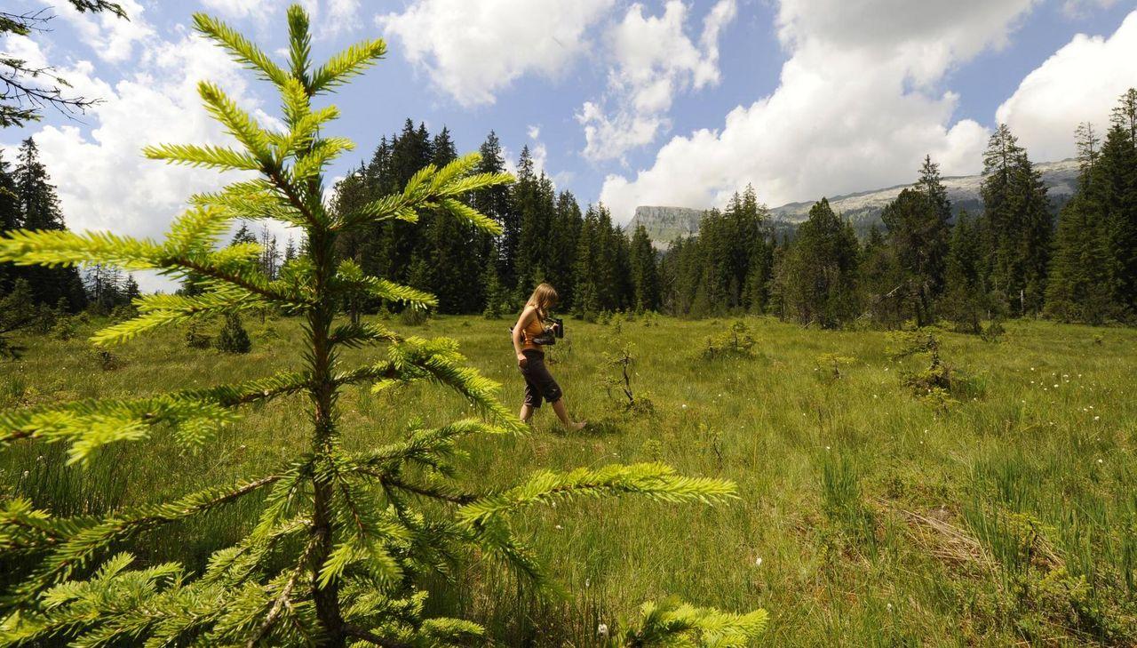 Moorlandschaftspfad in der UNESCO Biosphäre Entlebuch