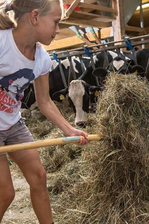 Das weisse Gold der grünen Wiese – Vom Gras zur Milch