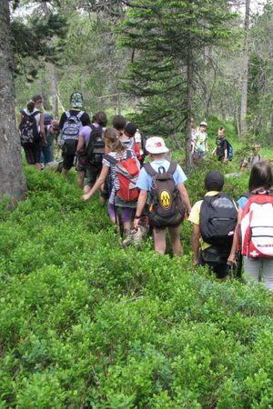 Exkursion «Faszinierende Reise durch den Wald»