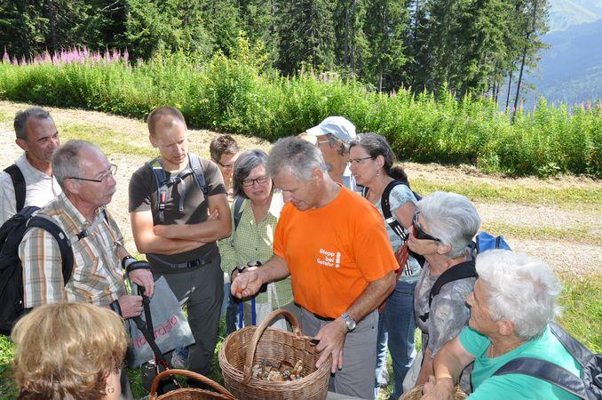 Kurs Pilze sammeln und verarbeiten
