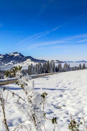 Winterwanderung Finsterwald-Wissenegg