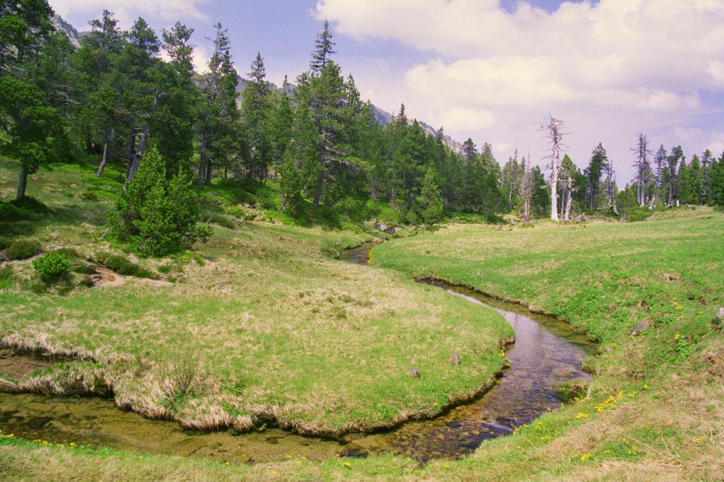Moorlandschaftspfad: Moorlandschaft Glaubenberg (2)